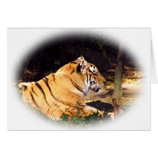 Tiger_1001 Greeting Card