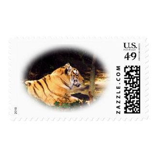 Tiger_1001 Stamp