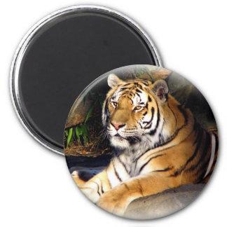 Tiger_1151 2 Inch Round Magnet