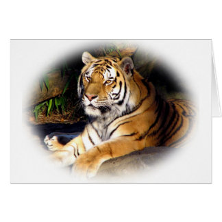Tiger_1151 Greeting Card