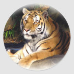 Tiger_1151 Stickers