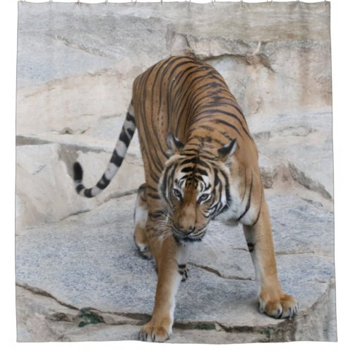 Tiger 1216 AJ Shower Curtain