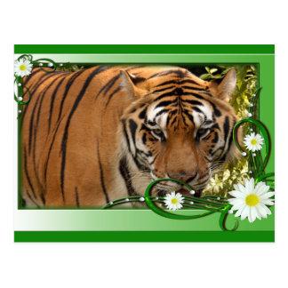 tiger-1-st-patricks-0042 tarjetas postales