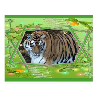 tiger-1-st-patricks-0056 postcard