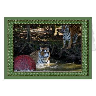tiger-1-st-patricks-0065 tarjeta de felicitación