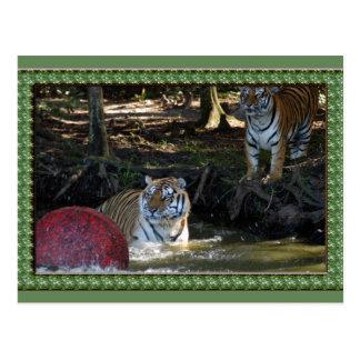 tiger-1-st-patricks-0065 tarjeta postal