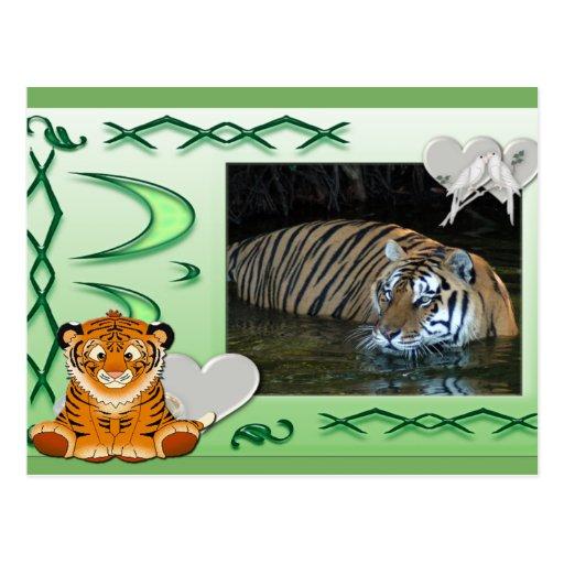 tiger-1-st-patricks-0069 tarjeta postal