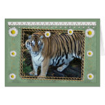 tiger-1-st-patricks-0076 card