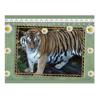 tiger-1-st-patricks-0076 tarjeta postal