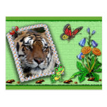 tiger-1-st-patricks-0083 postales