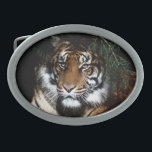 "Tiger 4 Belt Buckle<br><div class=""desc"">Tiger 4 Belt Buckle</div>"
