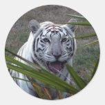 Tiger_6170e blanco pegatinas redondas