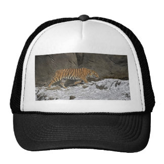 Tiger 8 Month Old Cub Ball Cap Trucker Hat