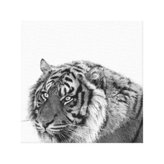 Tiger african animal photo black and white canvas print