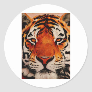 Tiger ( Amur ) Sticker