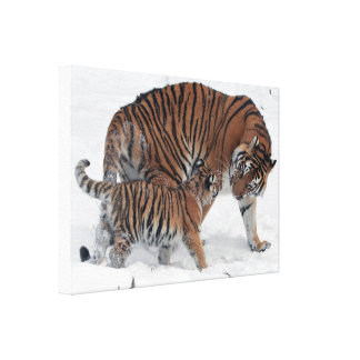 Tiger and cub in snow beautiful photo canvas print