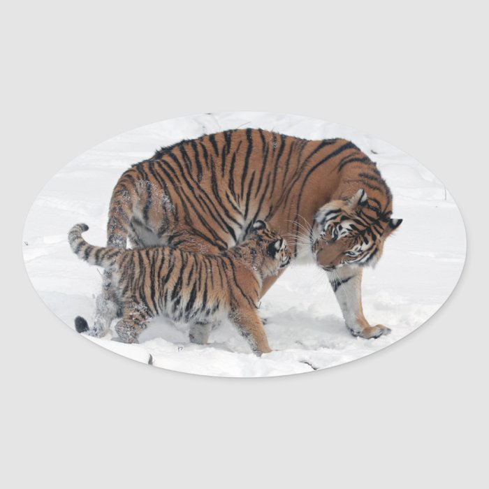 Tiger and cub in snow beautiful photo, gift oval sticker