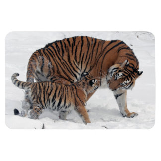 Tiger and cub in snow beautiful photo magnet, gift magnet