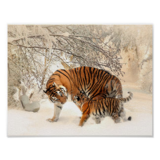Tiger and cub in snow poster