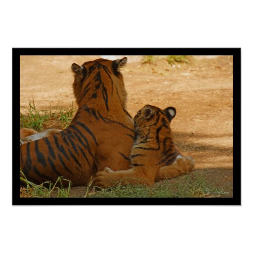 Tiger and Cub Poster