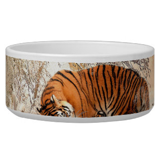 Tiger and cub - tiger bowl