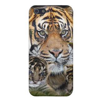 Tiger and Cubs i-pod Case For iPhone SE/5/5s