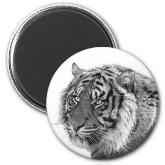 Tiger animal wild jungle black and white photo magnet