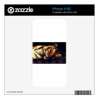 Tiger Animal Wildlife Resting Macro Closeup Decals For The iPhone 4S