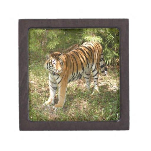 Tiger_Aroara004 Cajas De Regalo De Calidad