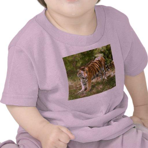 Tiger_Aroara004 Camiseta