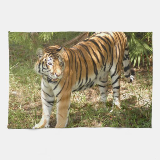 Tiger_Aroara004 Kitchen Towel