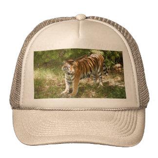 Tiger_Aroara004 Trucker Hat