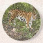 Tiger_Aroara006 Posavasos Diseño