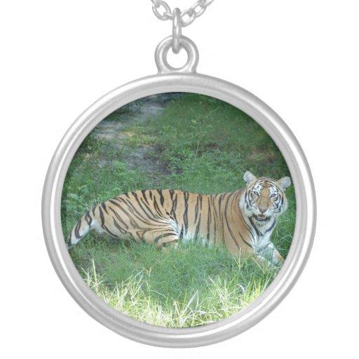 Tiger_Aroara011 Colgante Redondo