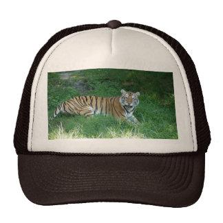 Tiger_Aroara011 Gorras De Camionero