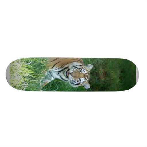 Tiger_Aroara011 Patineta Personalizada