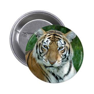 Tiger_Aroara012 Pinback Buttons