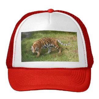 Tiger_Aroara027 Gorros Bordados