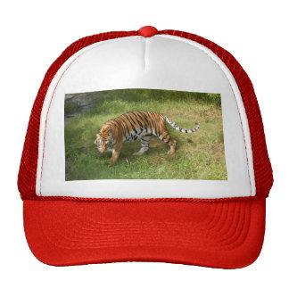 Tiger_Aroara027 Gorras