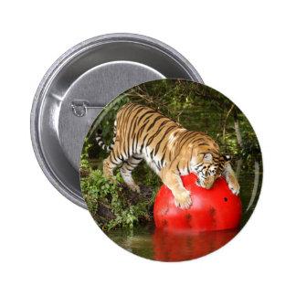 Tiger_Aroara040 Button