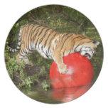 Tiger_Aroara046 Dinner Plate