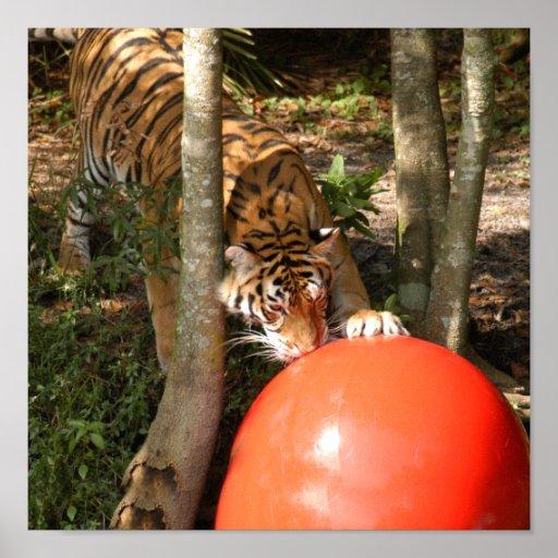 Tiger_Aroara055 Posters