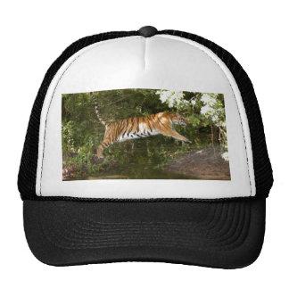 Tiger_Aroara059 Gorro