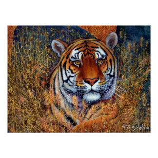 Tiger at Rest Print