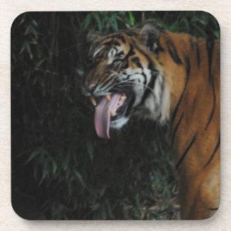 Tiger at the Zoo Coaster