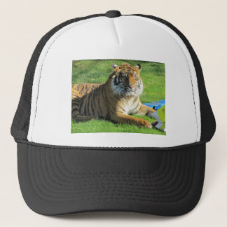 tiger at the zoo trucker hat