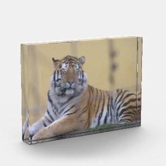 Tiger Acrylic Award