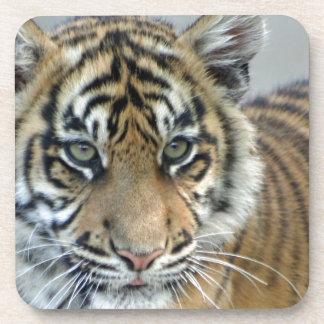 Tiger baby 001 coaster