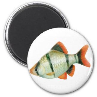 Tiger Barb Aquarium Fish Magnet