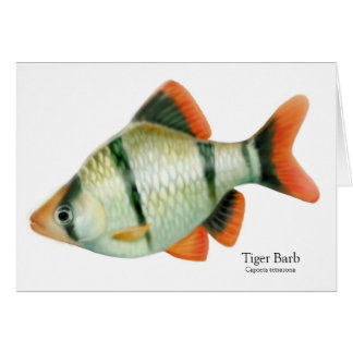 Tiger Barb Tropical Fish Card